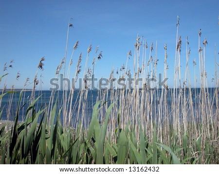 beach vegetation - stock photo