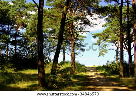 Beach way to the Baltic Sea through pine forest - stock photo