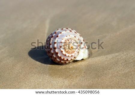 BEACH WINKLE: Winkle on wet sand beach - stock photo