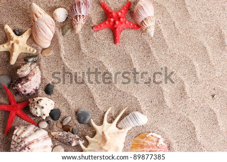 Beach with a lot of seashells and starfishes - stock photo