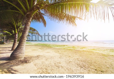 beach with coconut palm and sea at sunset time - stock photo