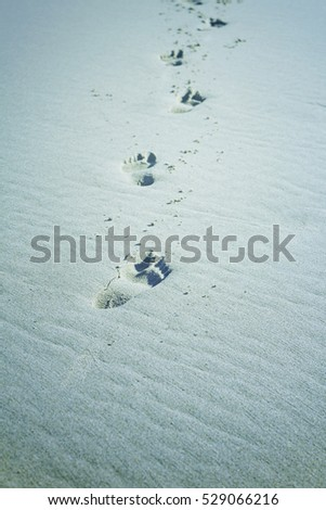 Beach with footprints on the shore, sand and water