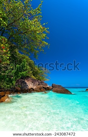 beach with green trees by the sea with turquoise water - stock photo