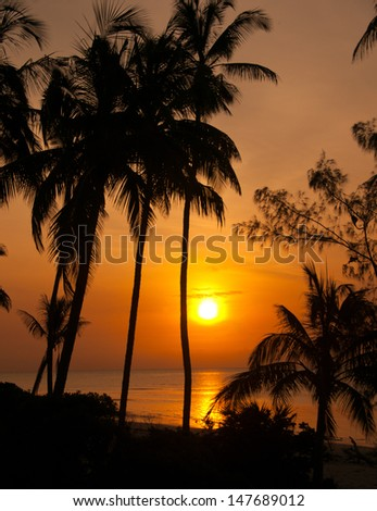 beach with palm trees at sunset - indian ocean in tanzania national park saadani - stock photo