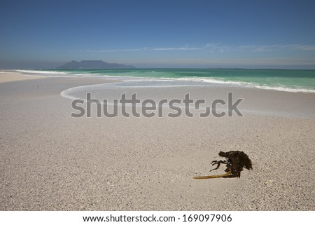 Beach with stranded Kelp seaweed at Bloubergstrand with Table Mountain beyond, South Africa - stock photo