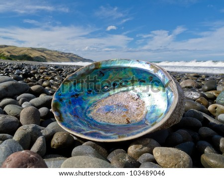 Beached empty Paua, Perlemoen or Abalone shell showing the iridescent nacre mother-of-pearl interior lying ashore on gravel beach - stock photo