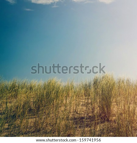 Beachgrass in dunes against clear blue sky, retro toned - stock photo