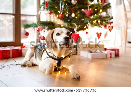 Golden Retriever Illuminated Christmas Decoration