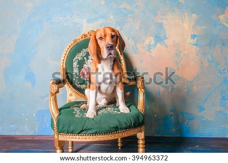 beagle dog sitting on a old vintage chair