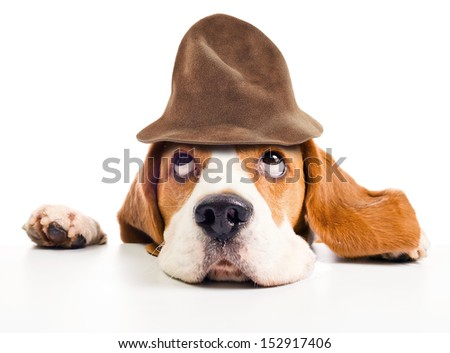 beagle  in wizard hat isolated on  white background - stock photo
