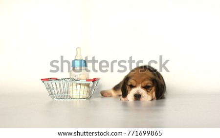 Top Small Beagle Adorable Dog - stock-photo-beagle-puppy-with-tricolor-isolated-on-white-background-portrait-cute-dog-with-milk-basket-small-771699865  Picture_183327  .jpg