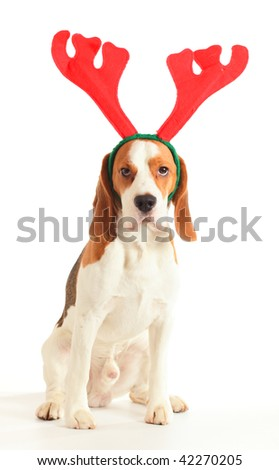 beagle with horns on a white background