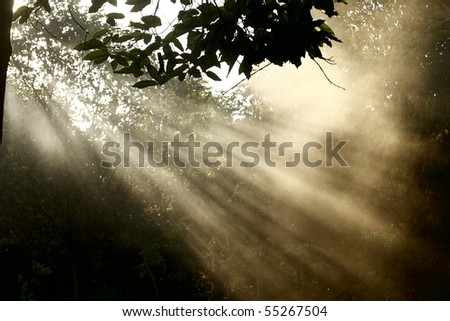 Beam of light and fog