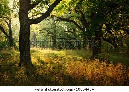 Beam of Light in the Forest - stock photo