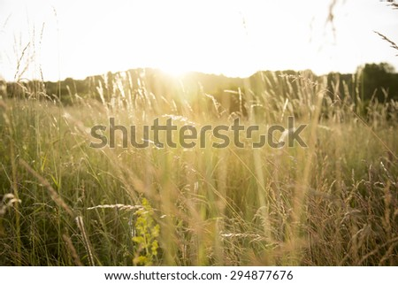 Beams of light filtering through the grass. - stock photo