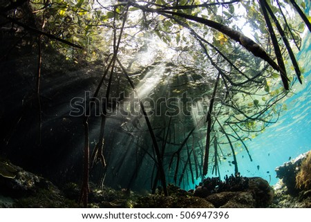 "Beams of light shine through the canopy of a mangrove forest in Raja Ampat, Indonesia. This region is famous for its ""blue water mangroves."""