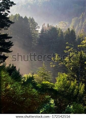 Beams of morning sun highlight the fog in a California canyon - stock photo