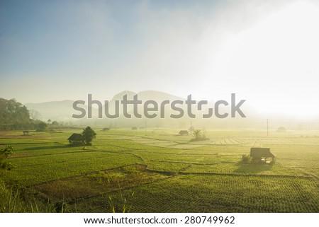Bean Fields at Mae Hong Son-Thailand - stock photo