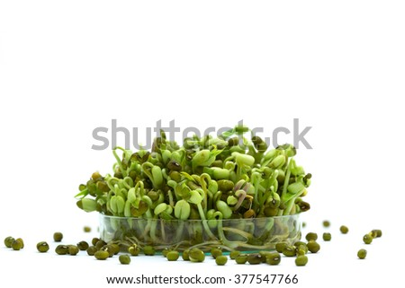 Bean sprout in petri dish genetic modified - stock photo