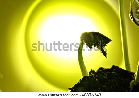bean sprout in the green back light - stock photo