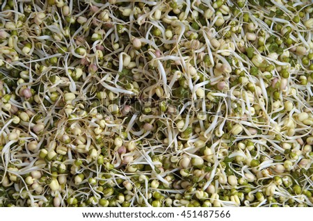 Bean sprouts pile entangled close-up - stock photo