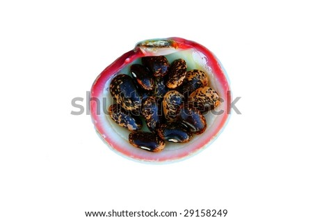 beans and shells - stock photo
