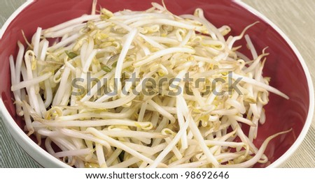 Beansprouts - stock photo