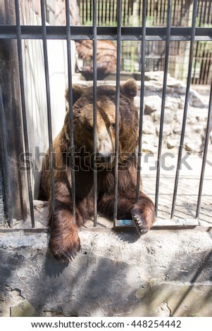 Bear behind a fence in zoo