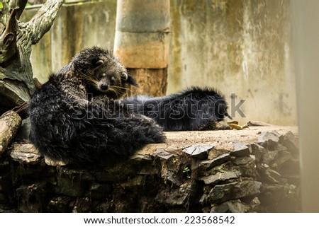 bear cat - stock photo