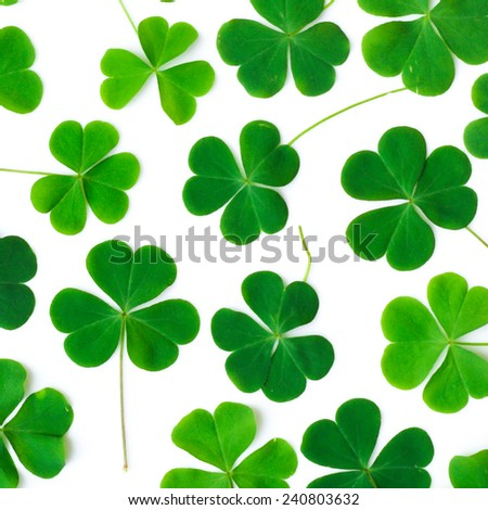 Bear Clover Leaf Green of a St. Patrick's Day Background - stock photo