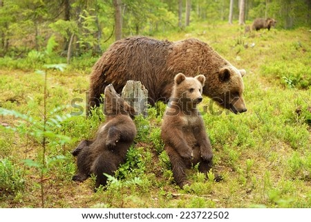 Bear cubs with their mother - stock photo
