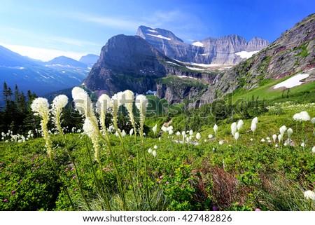 Bear grass and beautiful mountain landscape Glacier National Park - stock photo