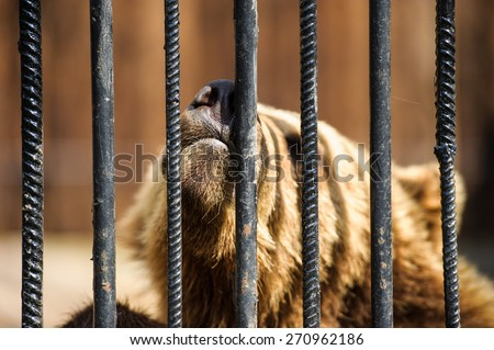 bear in a cage - stock photo