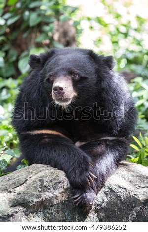 Bear in zoo.