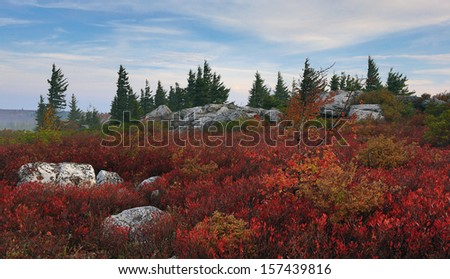 Bear Rocks in Dolly Sods Wilderness Area, WV - stock photo