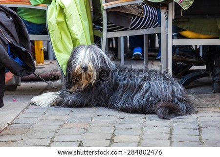 Bearded Collie sitting at a street restaurant in the city - stock photo