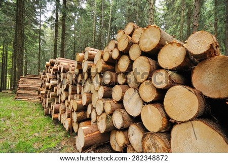 Beaten spruce tree trunks in the forest. - stock photo