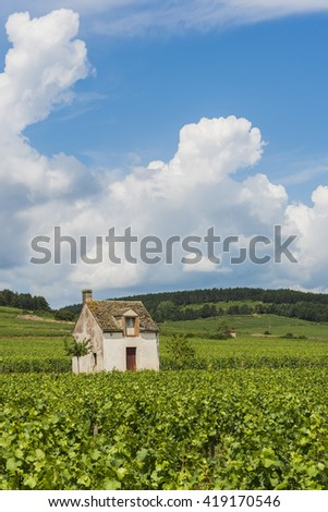 Beaune, France - July 27, 2013: Vineyard at Beaune with small vineyard house, France.