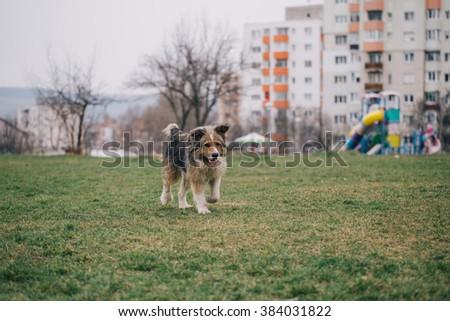 beautiful abandoned dog just got adopted - stock photo