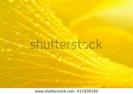 Beautiful abstract background, Closeup of yellow flower petals for background, Macro of yellow flower with water droplets, Yellow texture - stock photo