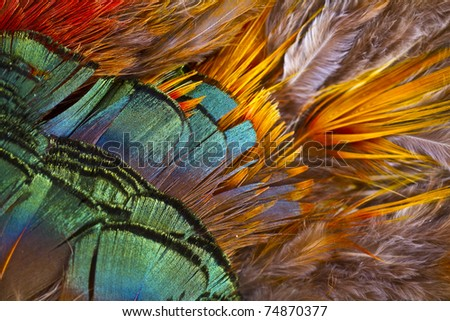 Beautiful abstract background consisting of golden pheasant feathers - stock photo