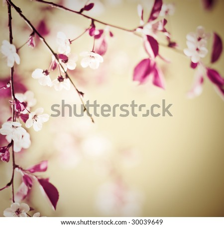 Beautiful abstract colors floral background framed with flowering branch - stock photo