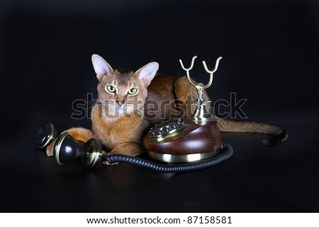 Beautiful Abyssinian cat and ancient phone on a black background