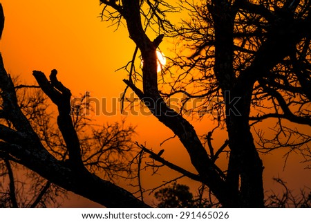 Beautiful African landscape at sunrise with branches of trees. Hluhluwe-Imfolozi Game Reserve, KwaZulu-Natal, South Africa. - stock photo