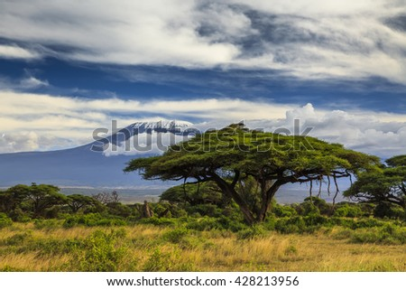 Beautiful African landscape on the background of Kilimanjaro. Kenya. Africa.