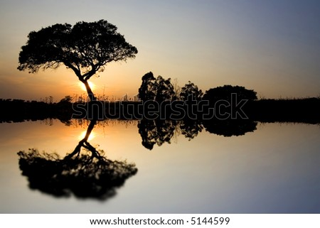 Beautiful African Landscape with Lonely tree in the Savannah at sunset - stock photo