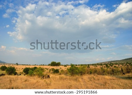Beautiful african landscape with wildebeest antelopes in Masai Mara, Kenya at sunset time.  - stock photo