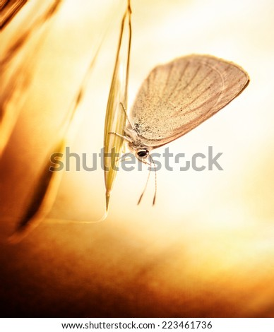 Beautiful aged grunge photo of butterfly sitting on plant, flora and fauna on spring time, little insect with wings, retro style picture - stock photo