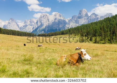 Beautiful alpine panorama, group Pala of dolomites from Calaita lake meadows, Italian landscape - stock photo
