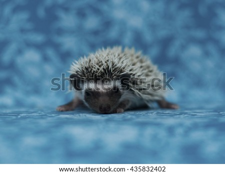 beautiful and cute young small hedgehog baby in flower vintage background - stock photo